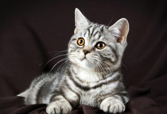Как вывести у кошек глистов