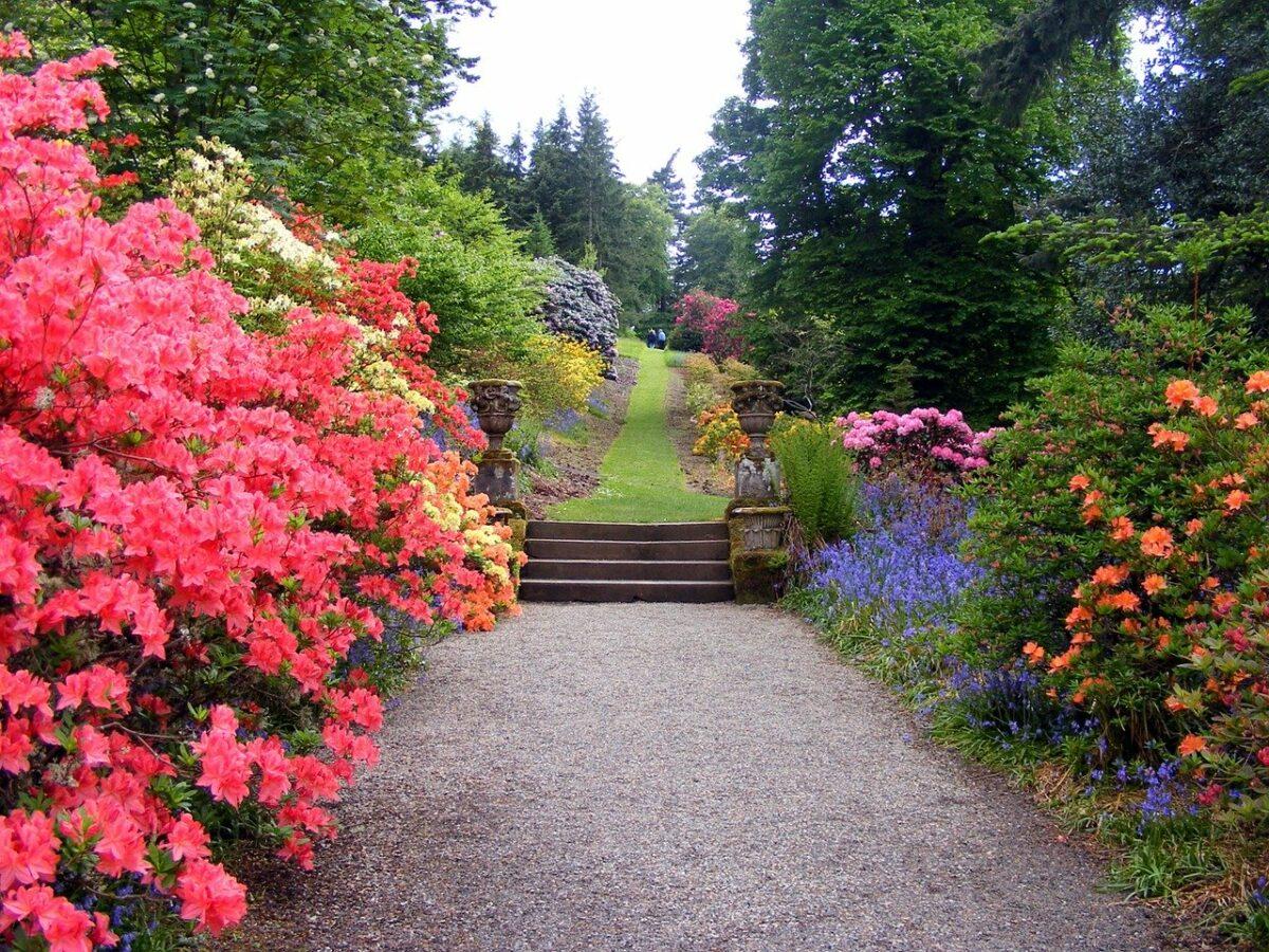 Декоративный сад огород