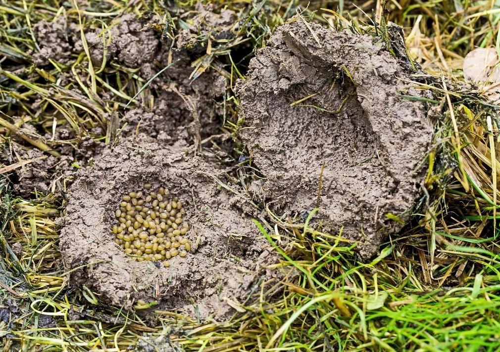 Как выглядит гнездо насекомого
