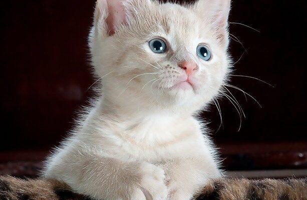 Стерилизация кошек в домашних условиях