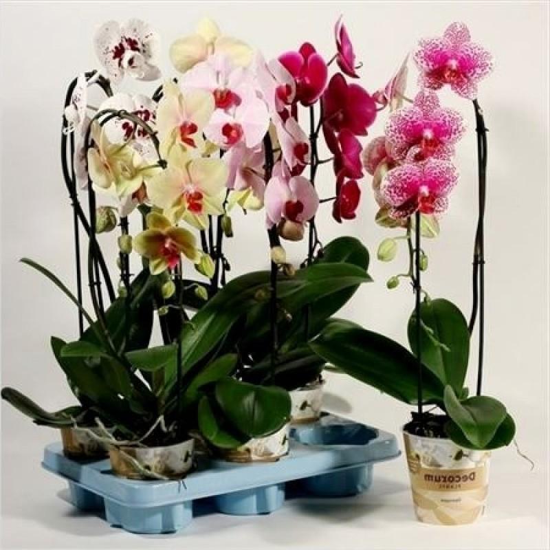 Как нужно ухаживать за орхидеей зимой в домашних условиях