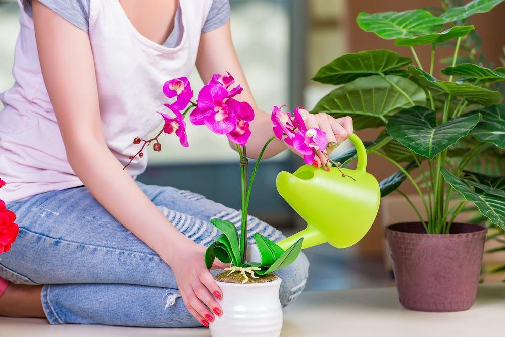 Уход за орхидеями зимой в домашних условиях