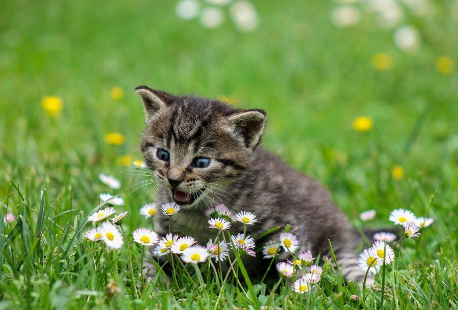 Котёнок на природе