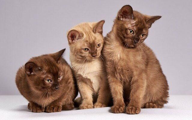 Домашние кошки и их болезни