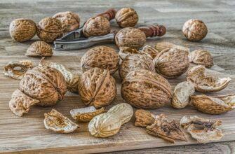 Как выбрать орех для посадки