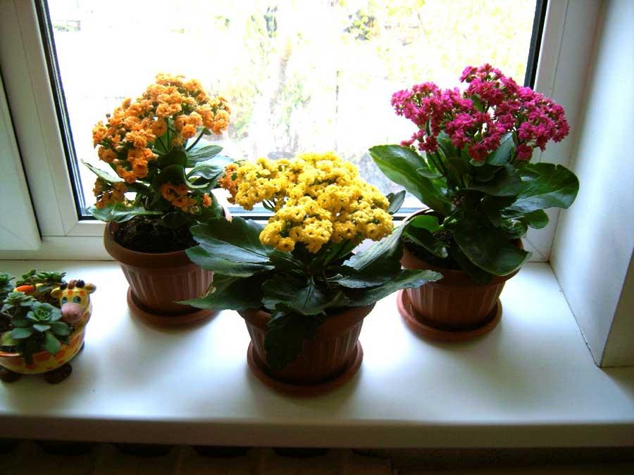 Оформление интерьера цветами в горшках