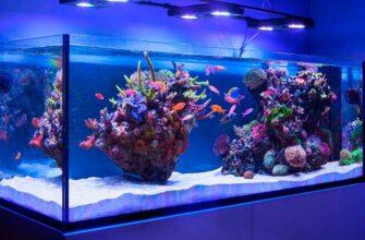 Как обслуживать аквариум