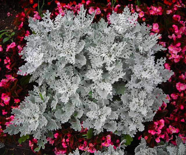Как ухаживать за растениями в цветниках и клумбах 12 советов