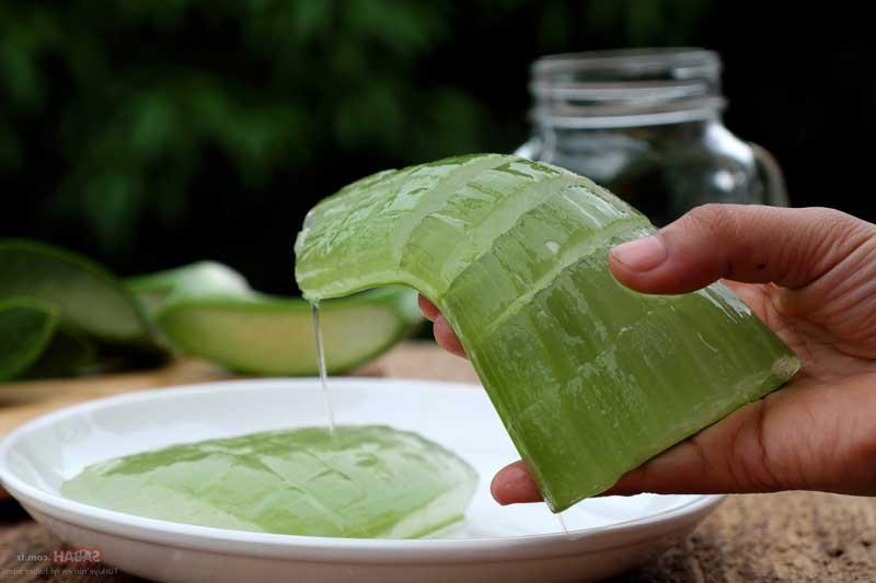 Растение для лечения кожи