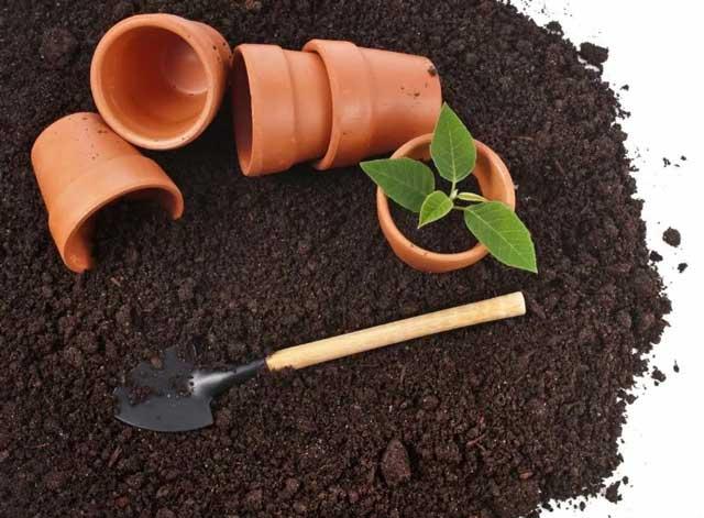 Почва для посадки комнатных растений
