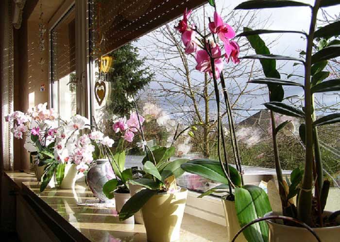Орхидеи на подоконнике
