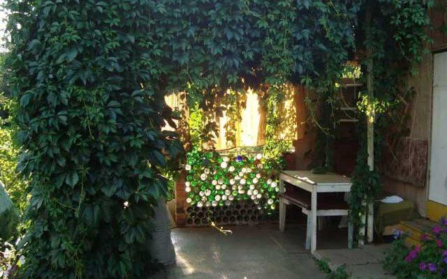 Вьющееся-растение-для сада фото и названия