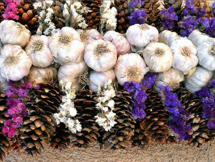 Выращивание чеснока и хранение