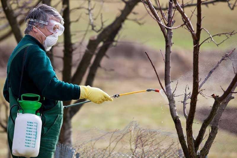 Обработка деревьев от камедетечения