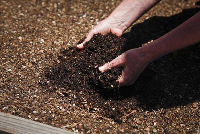 Как получить высокий урожай