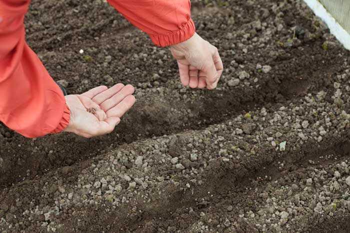 Секреты получения высоких урожаев овощей